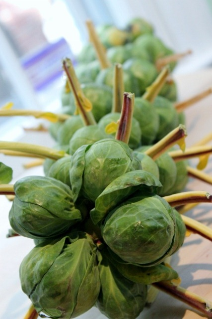 how to cut brussel sprouts off stalk