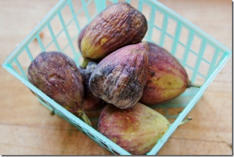 First Foods:  Fresh Figs by Daily Garnish